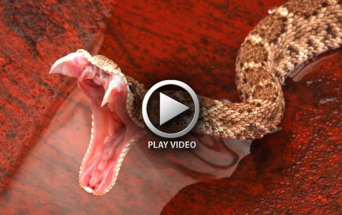 20_what_to_do_if_snake_bites_xxxlarge