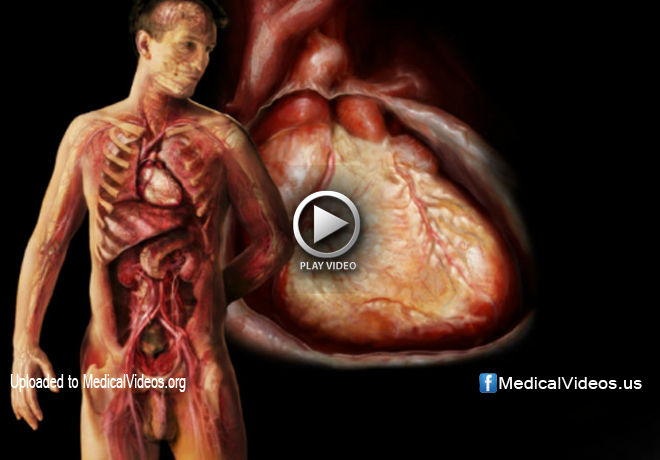 How to Examine The Cardiovascular System