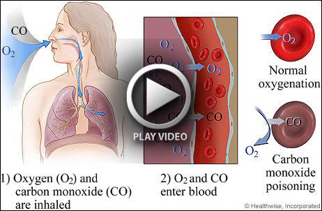 Oxygen Transport Mechanism