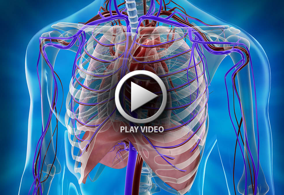 beatmap-human-cardiovascular-system-3d-rendering-02