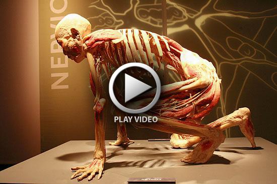 bodies-revealed