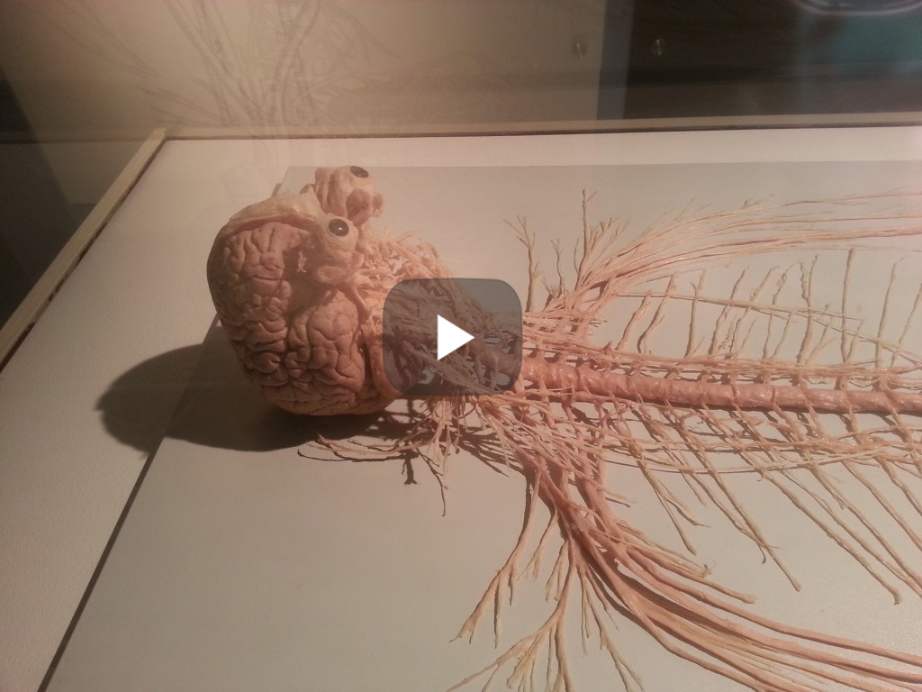 brain spinal cord system Education video | | DOKTORZ