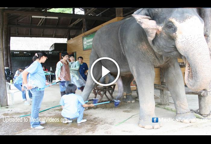 elephant sperm