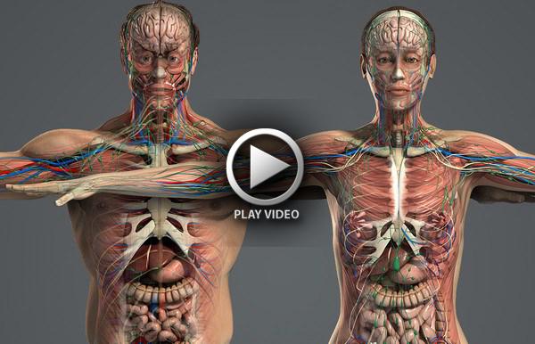 human-anatomy-3d-model-1